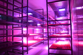 Indoor Agricultural Systems and Agricultural Consulting