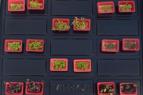 Microgreen Production